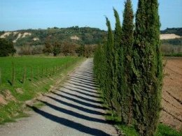 Cypress rows of Tuscany